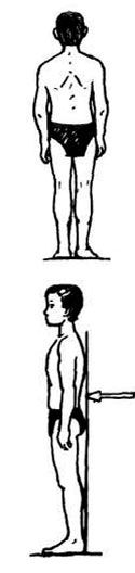 Правильное положение тела стоя