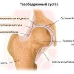 Строение тазобедренного сустава