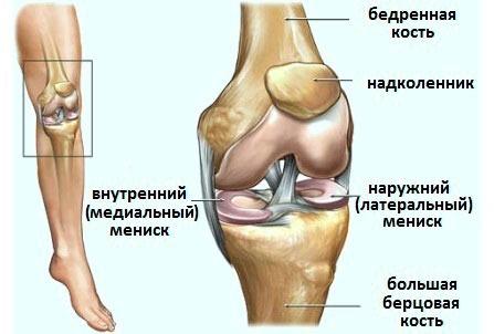 Расположение мениска в коленном суставе