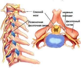 дугоотростчатые суставы шейного отдела